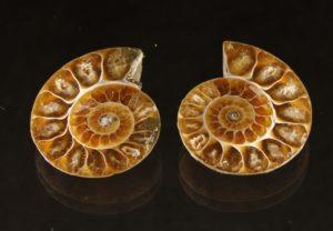 Ammonit, Madagaskar
